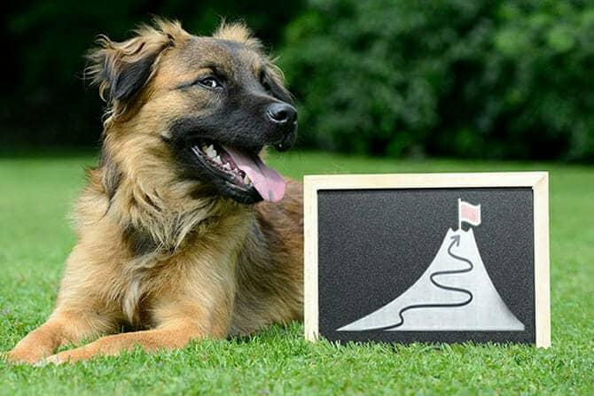 Hundetrainer Ausbildung - Hund mit Schiefertafel mit Ziel Hundeschule gründen
