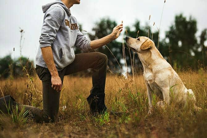 Hundetrainer Ausbildung - Hundetrainer gibt Hund Handzeichen