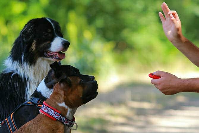 Hundetrainer Ausbildung - Klicker-Training von drei Hunden