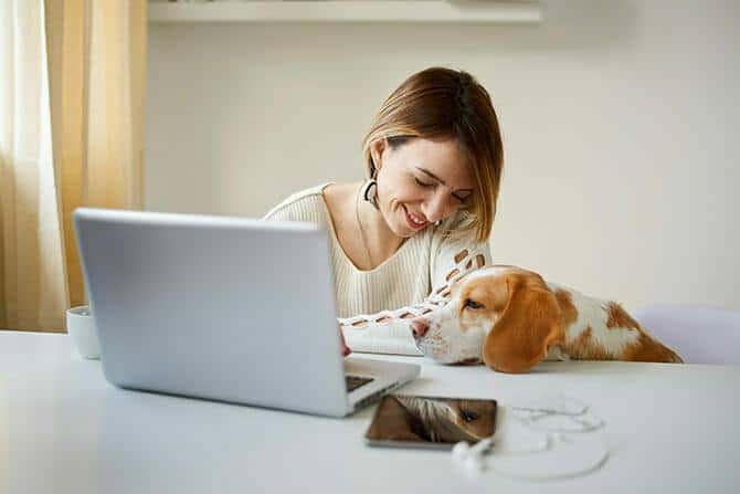 Hundetrainer Ausbildung Ablauf - Frau lernt am PC mit Hund