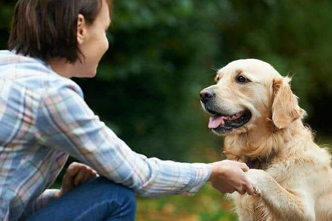 Hundetrainer Ausbildung Ablauf - Golden Retriever gibt Frauchen Pfote