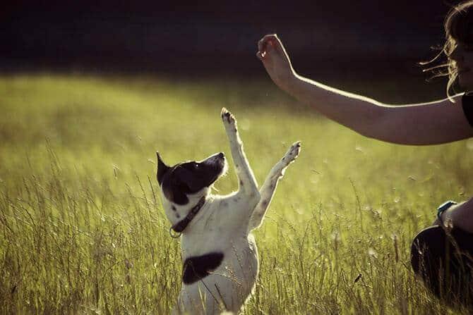 Hundetrainer Ausbildung Ablauf - Hund macht Männchen auf Fingerzeig