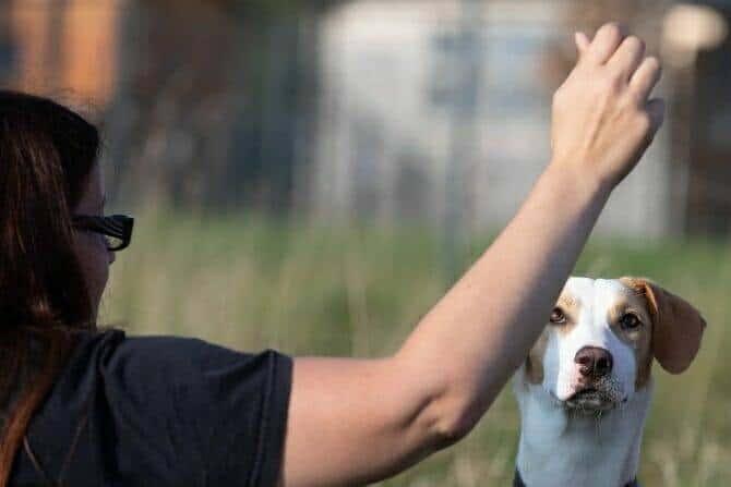 Hundetrainer Ausbildung Berufsbild - Frau gibt Hund Kommando