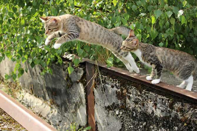 Katzenverhaltensberater Ausbildung - Katze auf einem Zaun springt neben anderer Katze herunter