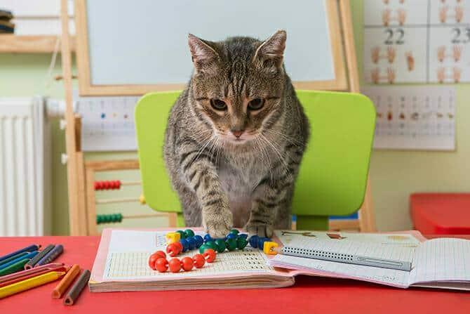 Katzenverhaltensberater Ausbildung - Katze lernt Rechnen in der Grundschule