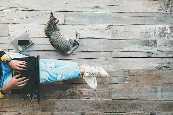 Katzenverhaltensberater Ausbildung - Katze liegt auf Holzplanken neben Menschen im Homeoffice