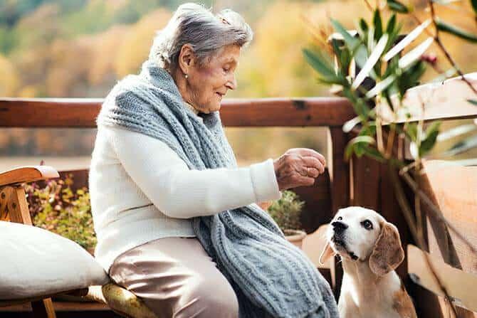 Therapiebegleithunde Trainer Ausbildung - ältere Frau sitzt an einem sonnigen Herbsttag gemeinsam mit ihrem Hund auf der Terrasse