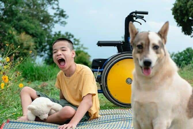 Therapiebegleithunde Trainer Ausbildung - glücklicher Junge mit Rollstuhl spielt mit einem Hund auf einer Picknickdecke