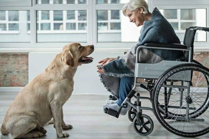 Therapiebegleithunde Trainer Ausbildung - zufriedene ältere Frau im Rollstuhl verbringt Zeit mit einem Hund