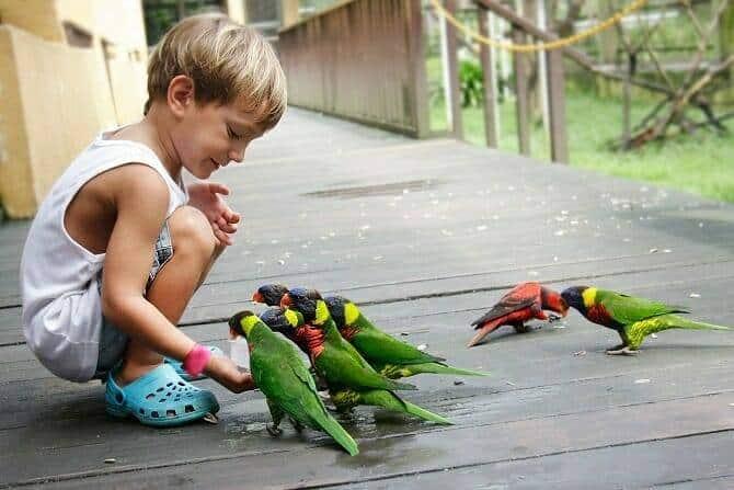 Tiergestützte Arbeit Ausbildung - kleiner Junge im Park füttert Papageien