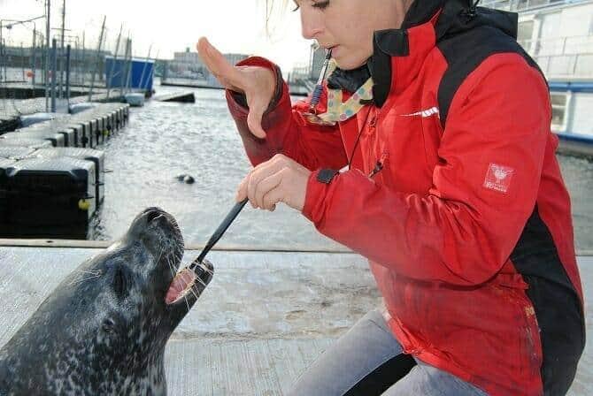Tiertrainer Ausbildung - Tiertrainerin putzt einer Robbe die Zähne