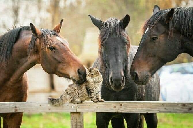 Verhaltensmedizinische Tierpsychologie Ausbildung - drei Pferde beschnuppern eine Katze