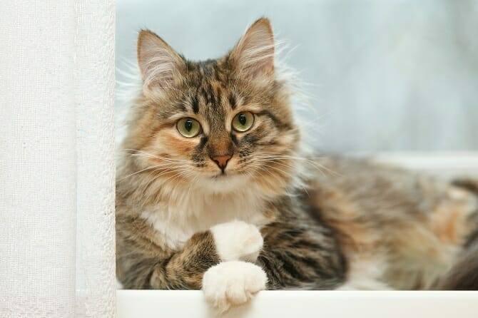 Verhaltensmedizinische Tierpsychologie Ausbildung - entspannte Katze liegt auf der Fensterbank