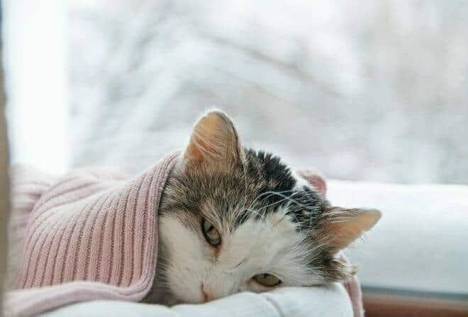 Verhaltensmedizinische Tierpsychologie Ausbildung - Katze liegt in einer Decke eingewickelt im Winter auf der Fensterbank