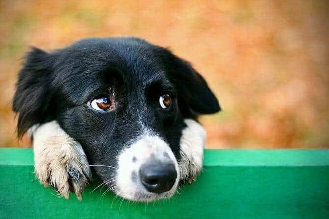 Verhaltensmedizinische Tierpsychologie Ausbildung - trauriger Hund auf einer Parkbank