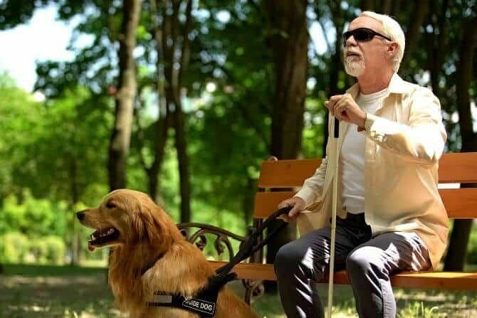 Assistenzhundetrainer Ausbildung - blinder Senior mit Assistenzhund beim Aufstehen von Parkbank