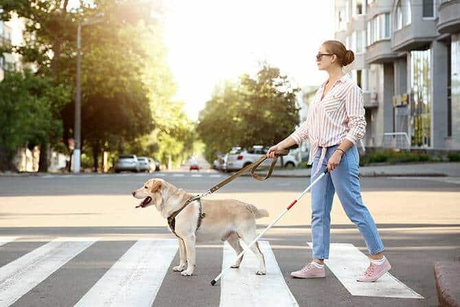 Ausbildung Assistenzhundetrainer - blinde Frau mit Assistenzhund überquert Straße