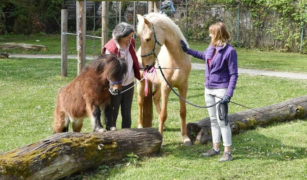 Pferdeverhaltensberaterin Annabelle Steiger