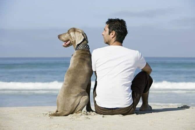 Psychologischer Coach Mensch Tier Beziehung Ausbildung -Rückenansicht Mann und Hund sitzen am Strand
