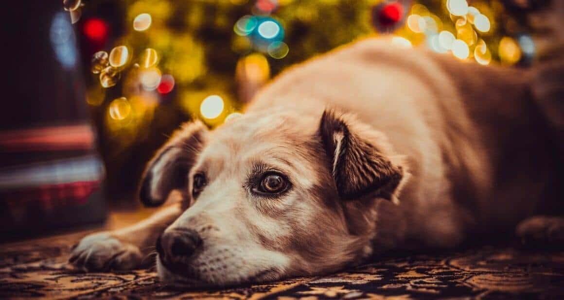 Silvester! Angst und Furcht beim Hund – der feine Unterschied
