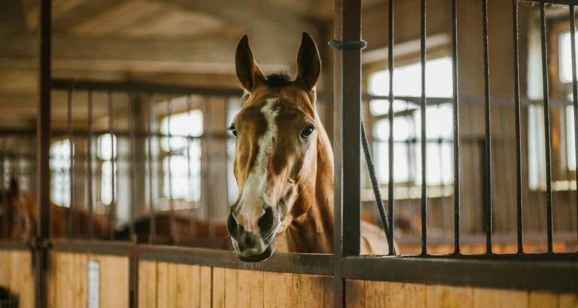 Silvester: Pferde und Stall richtig vorbereiten