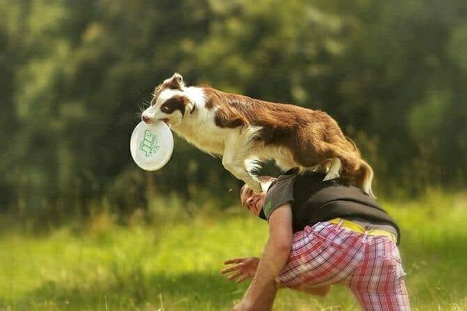 Sportwissenschaften Hund Ausbildung - Sportlicher Mann stützt Hund beim Sprung zum Frisbee