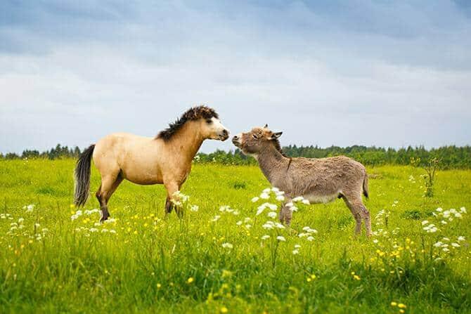 Tierpsychologie Ausbildung - Welsh Pony und Esel kommen sich im Sommer auf einer grünen Wiese näher