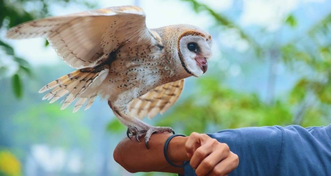 Tiertrainer-Ausbildung bei der ATN: Ein fulminanter Auftakt