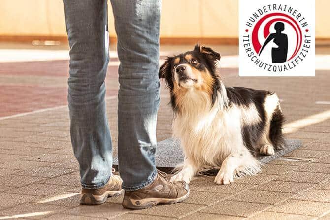 ATN Akademie - Hundetrainerin Tierschutzqualifiziert - ein österreichisches Gütesiegel