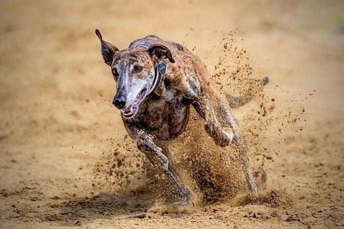 Jagdverhalten beim Hund warum Hunde gerne jagen 670x447 1