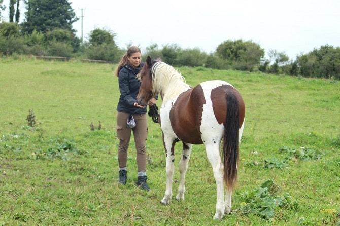Irland Pferdeprojekt ATN - Choice Based Training auf der Weide