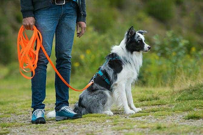 Hundetrainer Ausbildung - Border Collie an der Schleppleine
