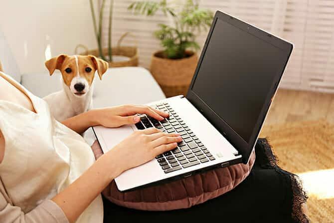 Hundetrainer Ausbildung - Frau lernt am Laptop mit Hund