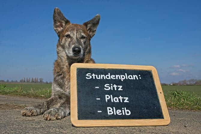 Hundetrainer Ausbildung - Hund mit einer Tafel mit Stundenplan