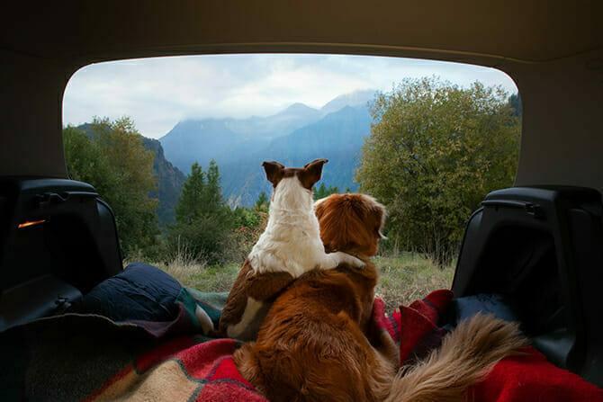 Tiererlebnis- & Eventtouristik Ausbildung - Nova Scotia Duck Tolling Retriever und Jack Russel genießen die Aussicht aus dem Auto beim Camping