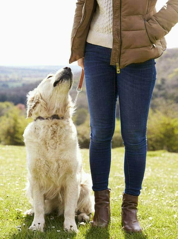 Hundetrainer Ausbildung Ablauf - Golden Retriever in der Natur mit Mensch