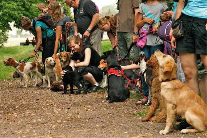Hundetrainer Ausbildung Ablauf - Hundeschule mit vielen Hunden