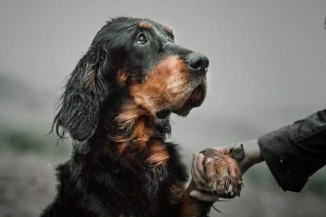 Hundetrainer Ausbildung Berufsbild - Hund gibt Pfote