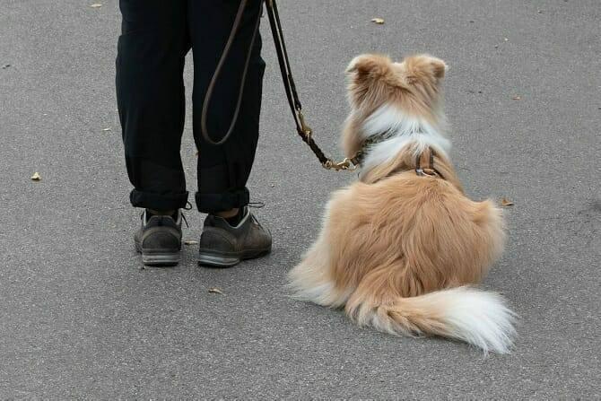 Hundetrainer Ausbildung Berufsbild - Hund macht Sitz an Leine