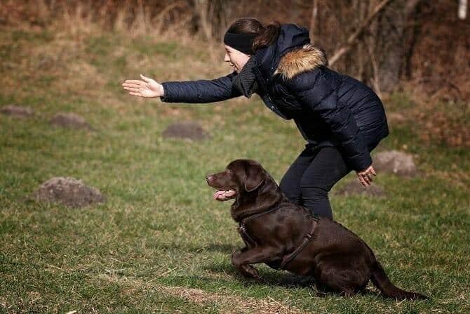 Hundetrainer Ausbildung Berufsbild - Mensch zeigt Hund Richtung an