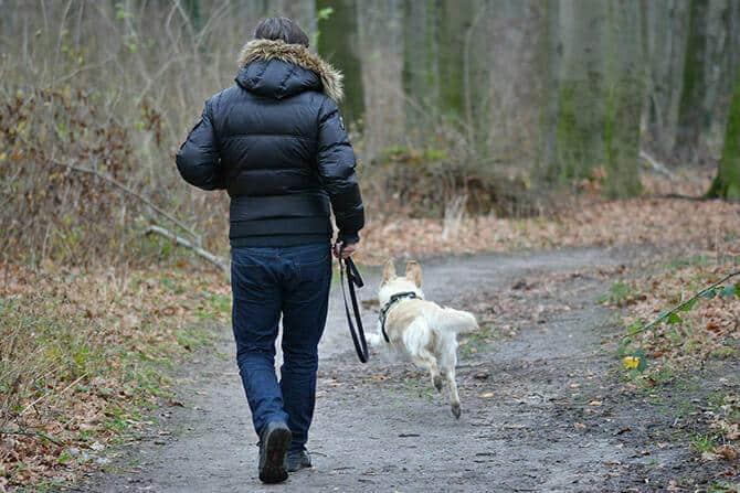 Hundeverhaltensberater Ausbildung - Hund läuft ohne Leine vor seinem Besitzer auf einem Waldweg im Herbst