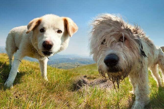 Hundeverhaltensberater Ausbildung - zwei Hunde im Sommer in den Bergen