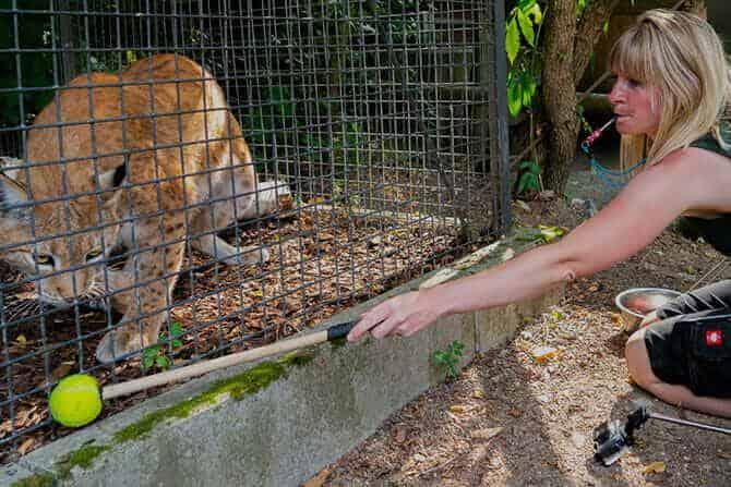 Tiertrainer Ausbildung - Target Training Luchs im Zoo