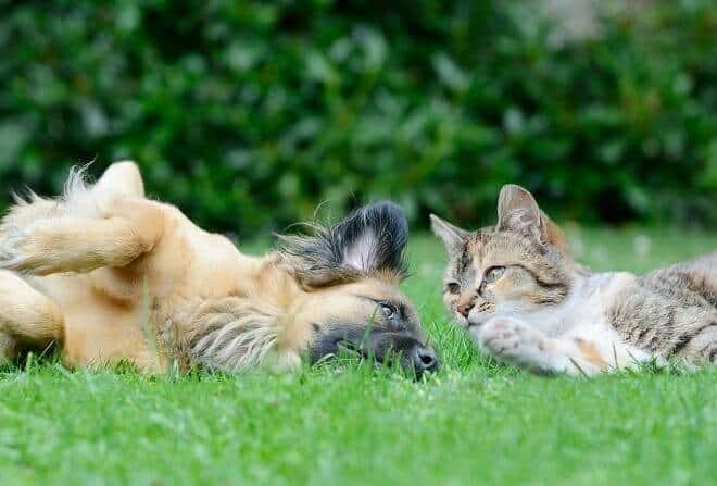 Verhaltensmedizinische Tierpsychologie Ausbildung - Katze und Hund liegen gemeinsam auf einer grünen Wiese im Garten