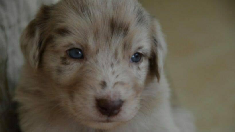 die vermeidung von uebergewicht bei hunden beginnt im welpenalter