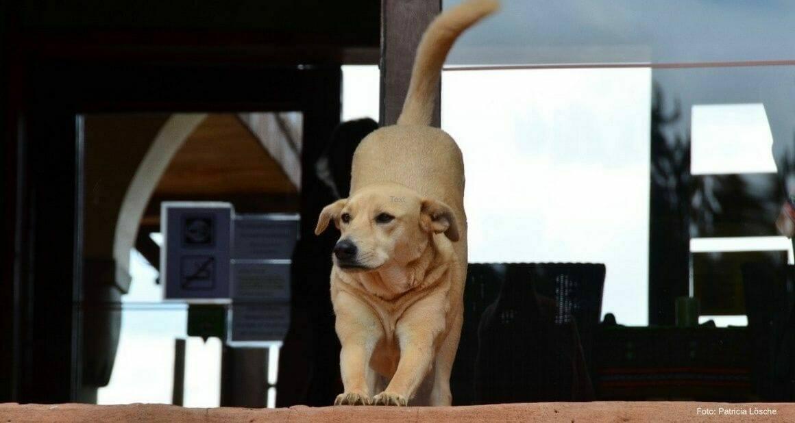 Hund im Winter: Zwischen Kälte und Langeweile