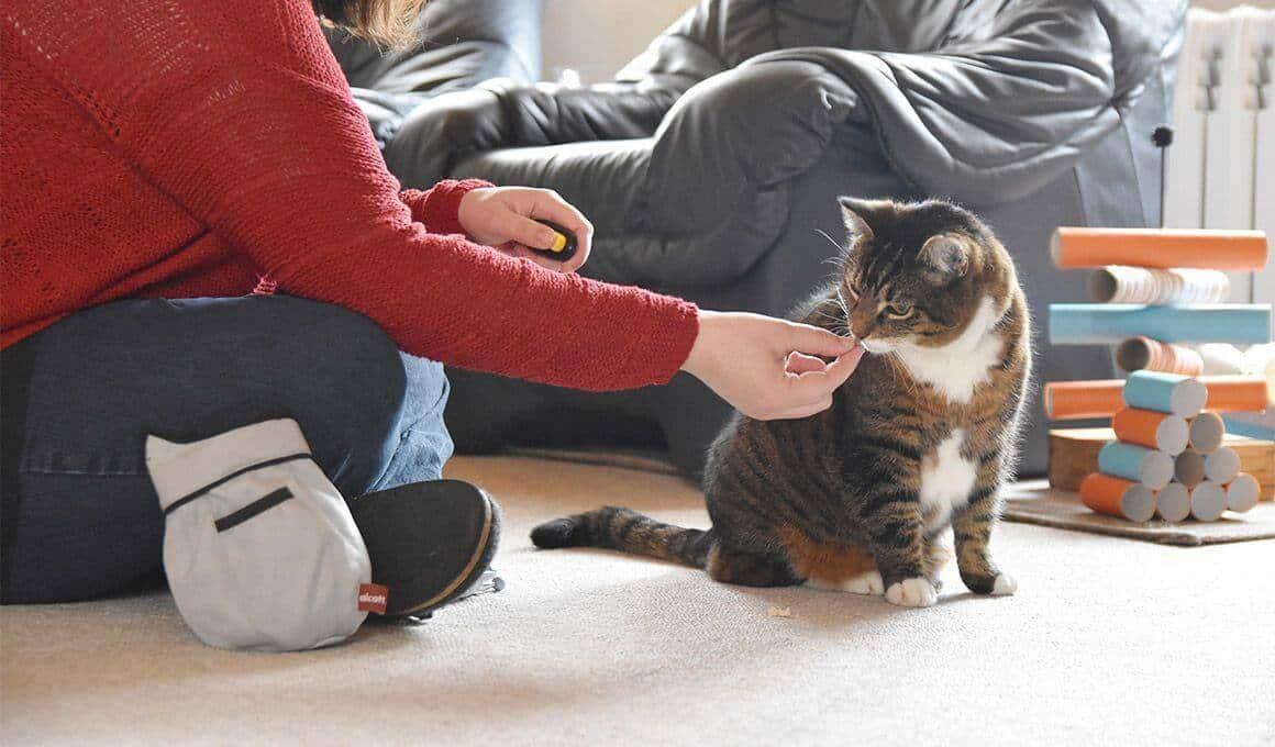 Katzenverhaltensberaterin Anne-Kathrin Mausolf