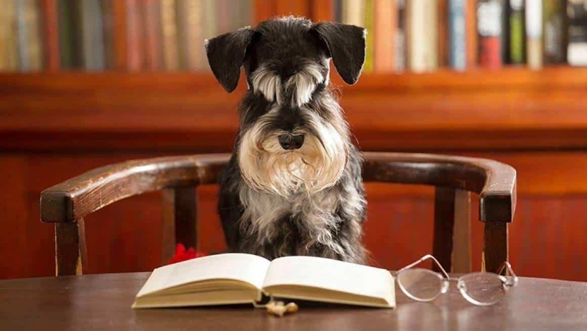 Kommt die Gassipflicht für Hunde? - Tierschutzhundeverordnung