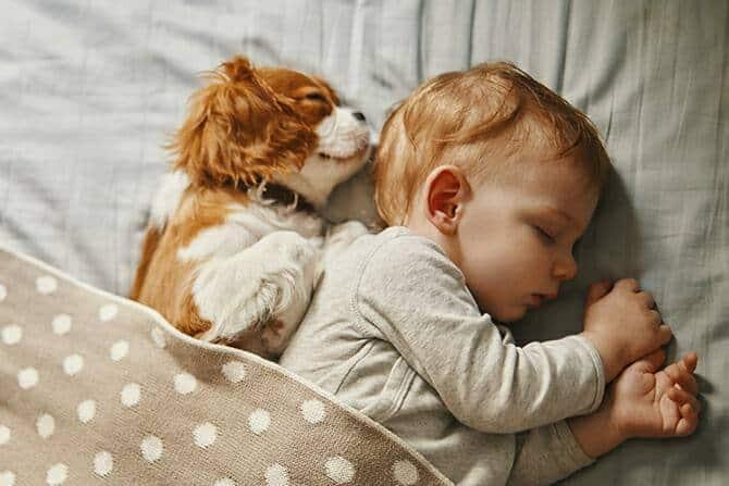 Psychologischer Coach Mensch Tier Beziehung Ausbildung - Baby und Hund schlafen friedlich