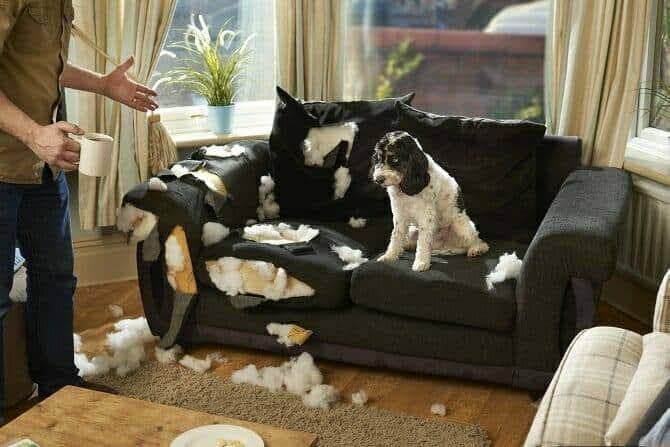 Psychologischer Coach Mensch Tier Beziehung Ausbildung - Hund zerfetzt Sofa zerfetzt während Mann Kaffee holt